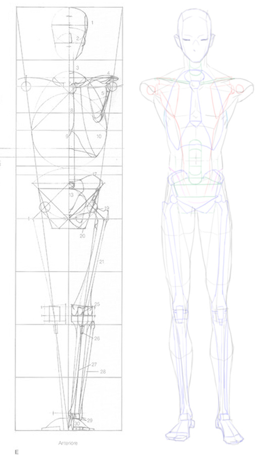 2016-04-23 front anatomy 005