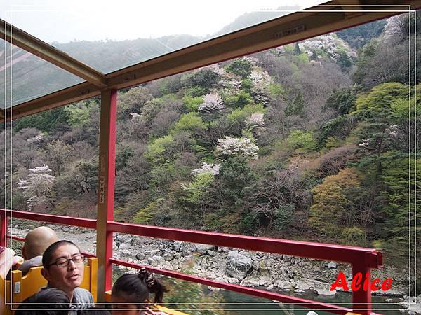 嵐山渡月橋_龜岡小火車_瑳峨野竹林12.jpg
