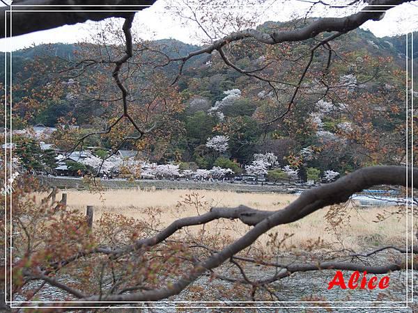 嵐山渡月橋_龜岡小火車_瑳峨野竹林18.jpg
