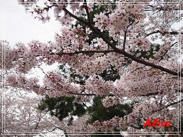 嵐山渡月橋_龜岡小火車_瑳峨野竹林24.jpg