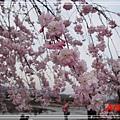 嵐山渡月橋_龜岡小火車_瑳峨野竹林28.jpg