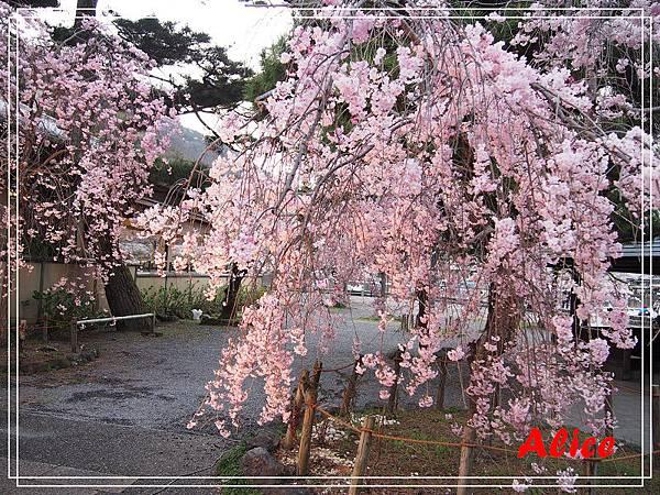 嵐山渡月橋_龜岡小火車_瑳峨野竹林34.jpg