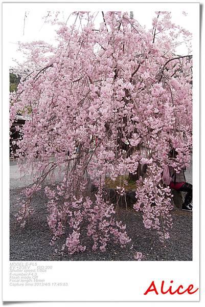 嵐山渡月橋_龜岡小火車_瑳峨野竹林42.jpg