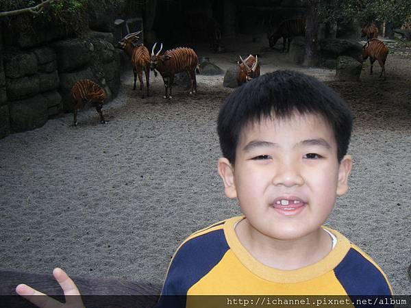 動物園5.JPG