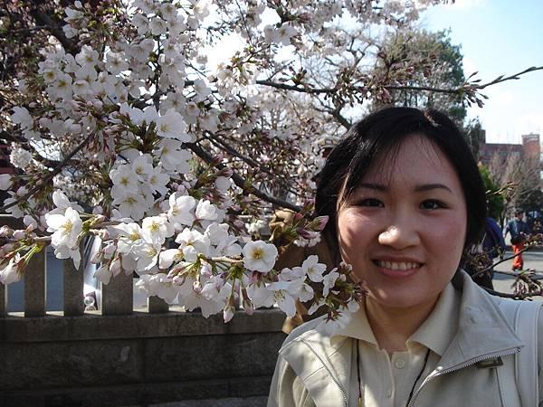 淺草神社旁邊的櫻花