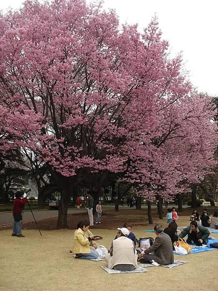 日本人野餐中...