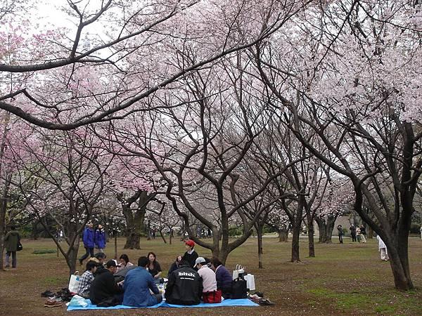 又是一群野餐的人們