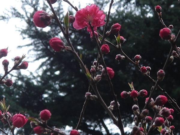 紅色小花好可愛