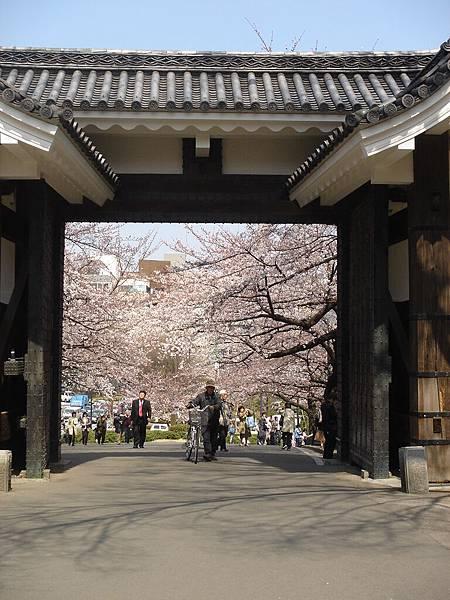 光外面那兩排櫻花就夠美的了