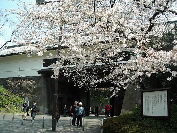 櫻花配大門