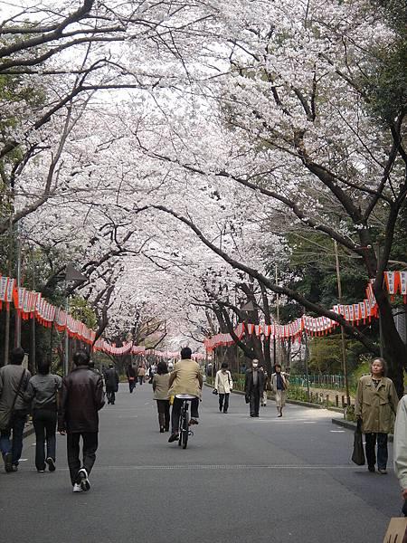 這裡就是傳說中的上野公園