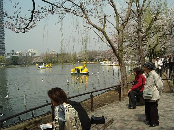 有池子就可以划船或踩船