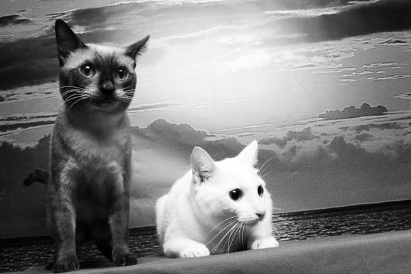 這張照片可以清楚看出兩隻貓的個性
