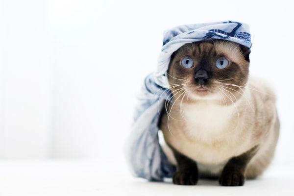 ichi的頭巾