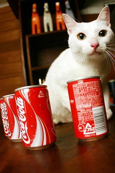 momo很配可樂罐