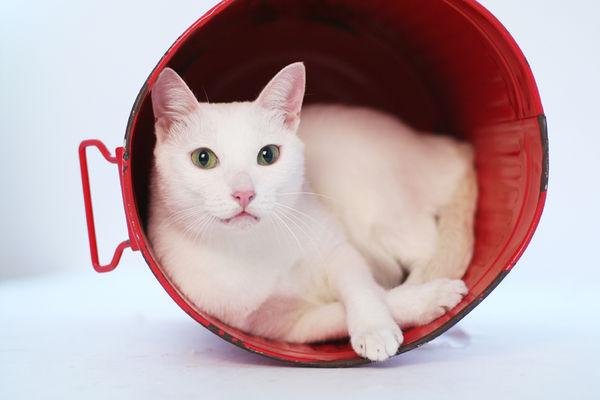 大概白貓什麼都配