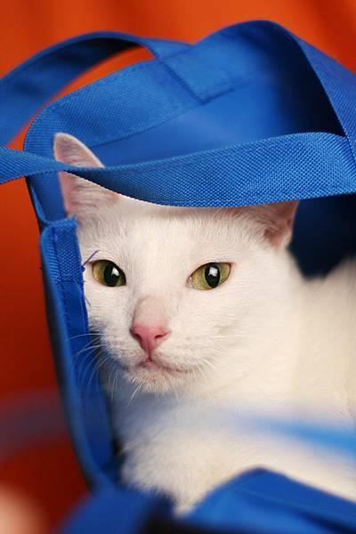是帶去的藍色袋子