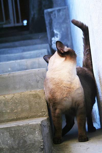 樓梯系列之...看後面