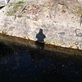 走在哲學之道上  水面浮著楓葉