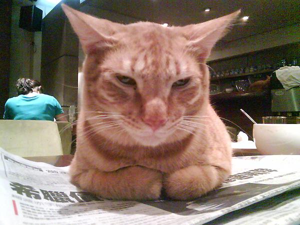 看報紙幹嘛 看我就好啦
