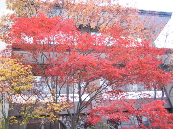 第一瀧本溫泉旅館紅葉