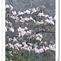 2009東勢大雪山之旅
