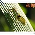 認識昆蟲的世界
