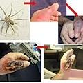 恐怖的蜘蛛