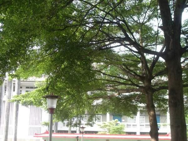學校風景3.JPG