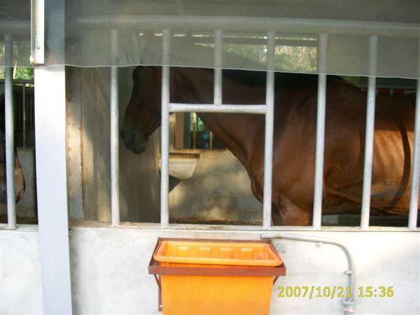 馬ㄝ (1).JPG