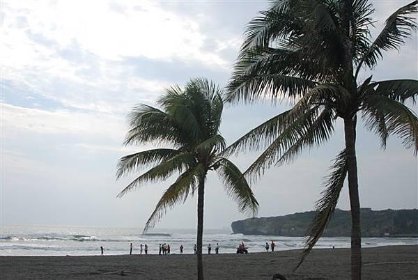 海&椰子樹