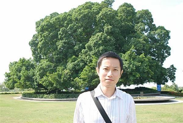 東山休息站--大樹