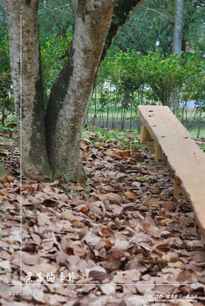 葉落的季節2.jpg