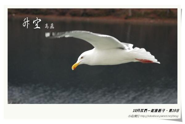 升空5.jpg