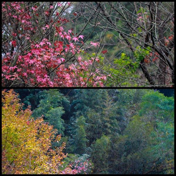瑪莉溫泉景觀露營區3.jpg