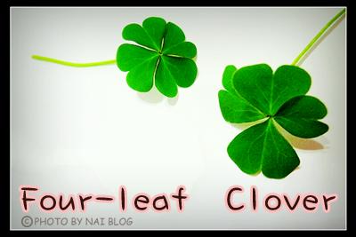 Four Leaf Clover 1