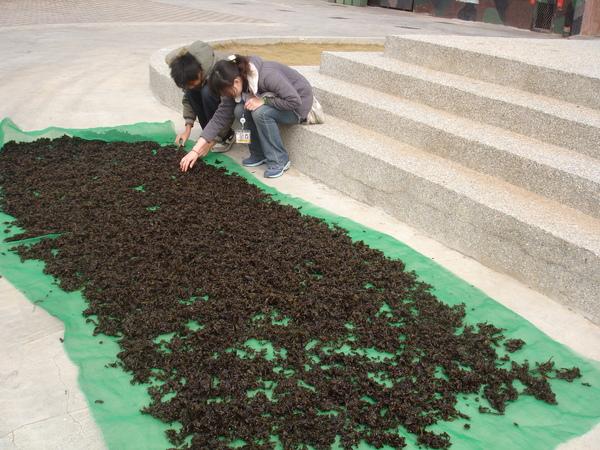 廣場曬紫菜