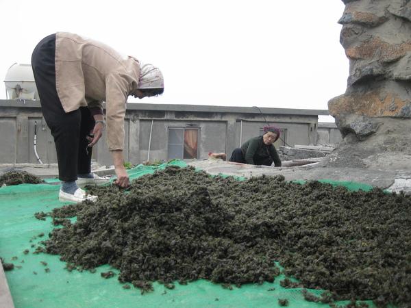 屋頂曬紫菜