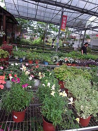 台北花卉村67