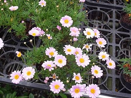 台北花卉村29