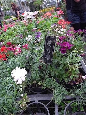台北花卉村40
