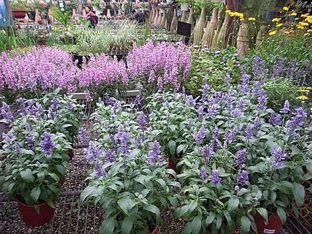 台北花卉村66