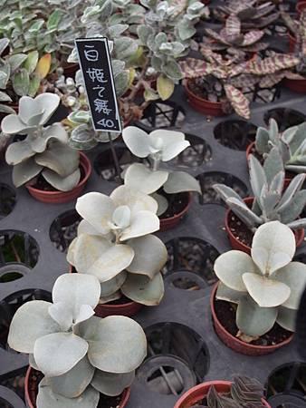 台北花卉村90