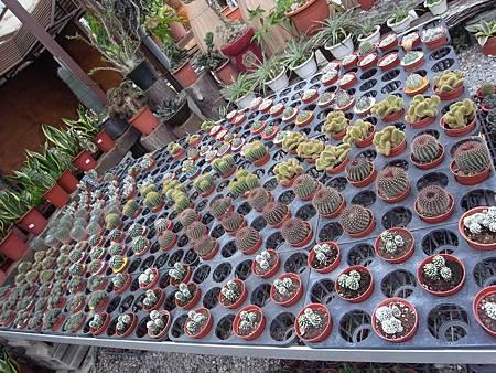 台北花卉村96