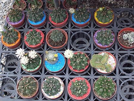 台北花卉村97