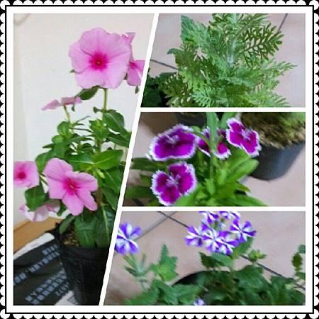 PhotoGrid_1380988943365-1