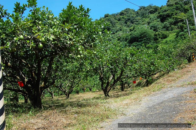 柚子園-2.jpg