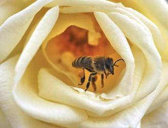 洗蜂蜜.jpg