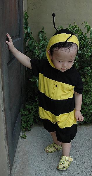 小蜜蜂-正面.jpg