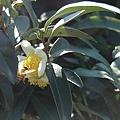 蜂採花-1.JPG